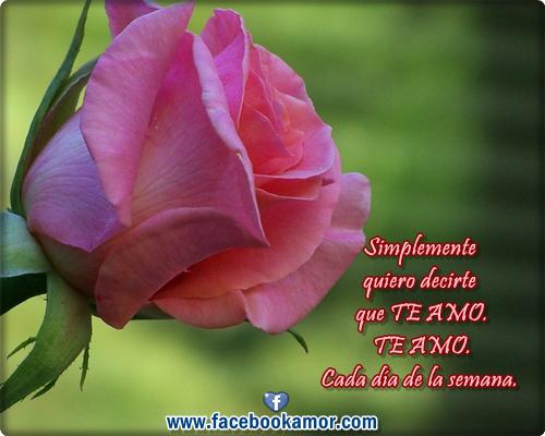 Imagenes Bonitas De Flores Con Frases: Frases De Rosas (63 Frases