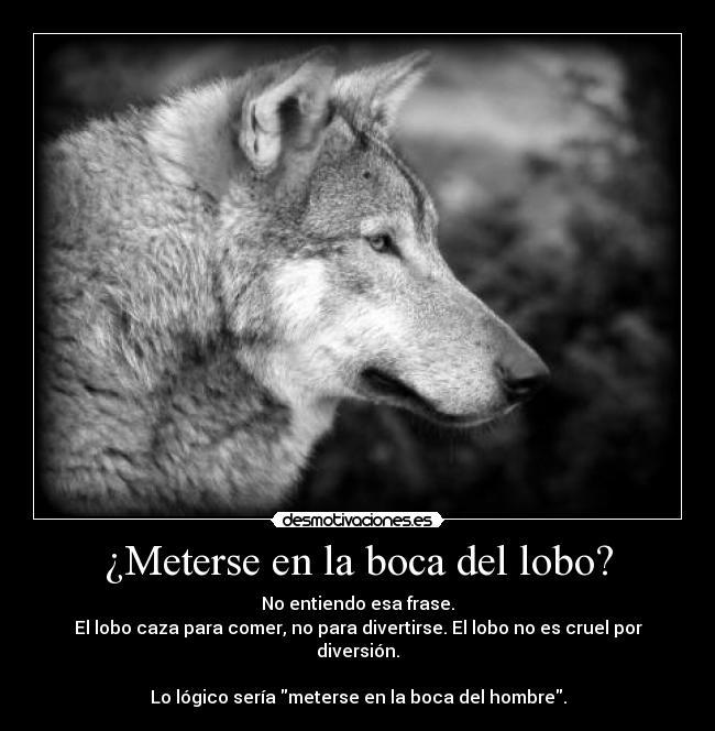Frases De Lobo 40 Frases