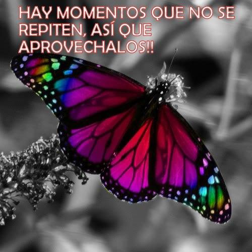 Frases De Mariposas 34 Frases