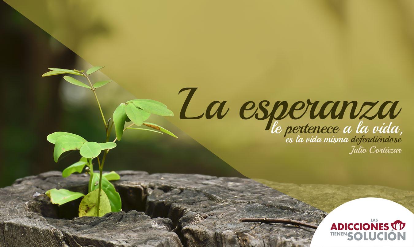 Frases De Esperanza 310 Frases